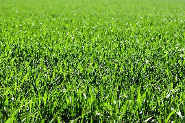 Jak mieć zadbany trawnik
